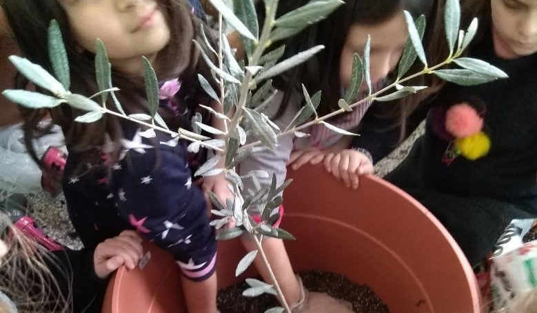 Greece – Planting an Olive Tree