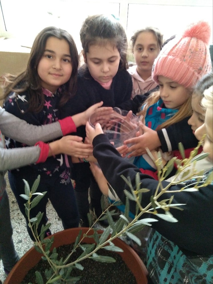 Growing up with Values from Storytelling - Greece - January 20 - Month of Peace - Planting an Olive Tree